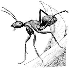 History of ants