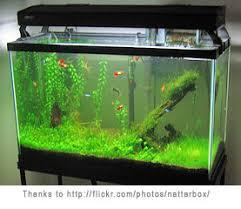 Starting a fishtank