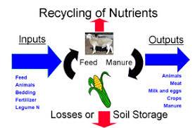 Animal waste management Agriculture