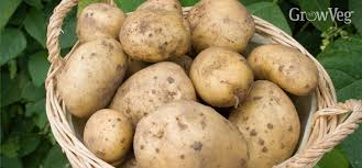 Get Better Potato Results By Following 3 Simple Steps