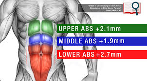 How does fast exercise abdominal muscle